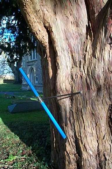 Tree Ring Services Yew Trees